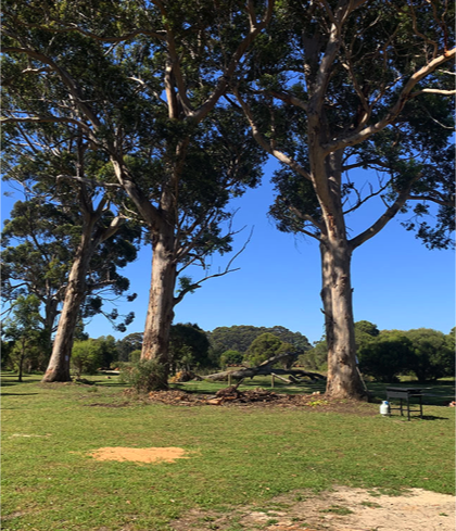 Boranup Camping Grounds
